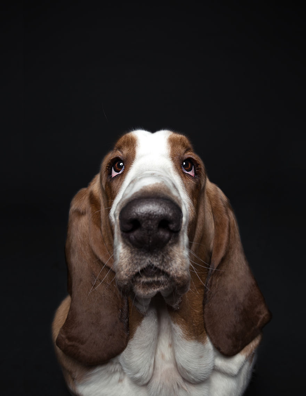 забавные портреты собак александра хохлова