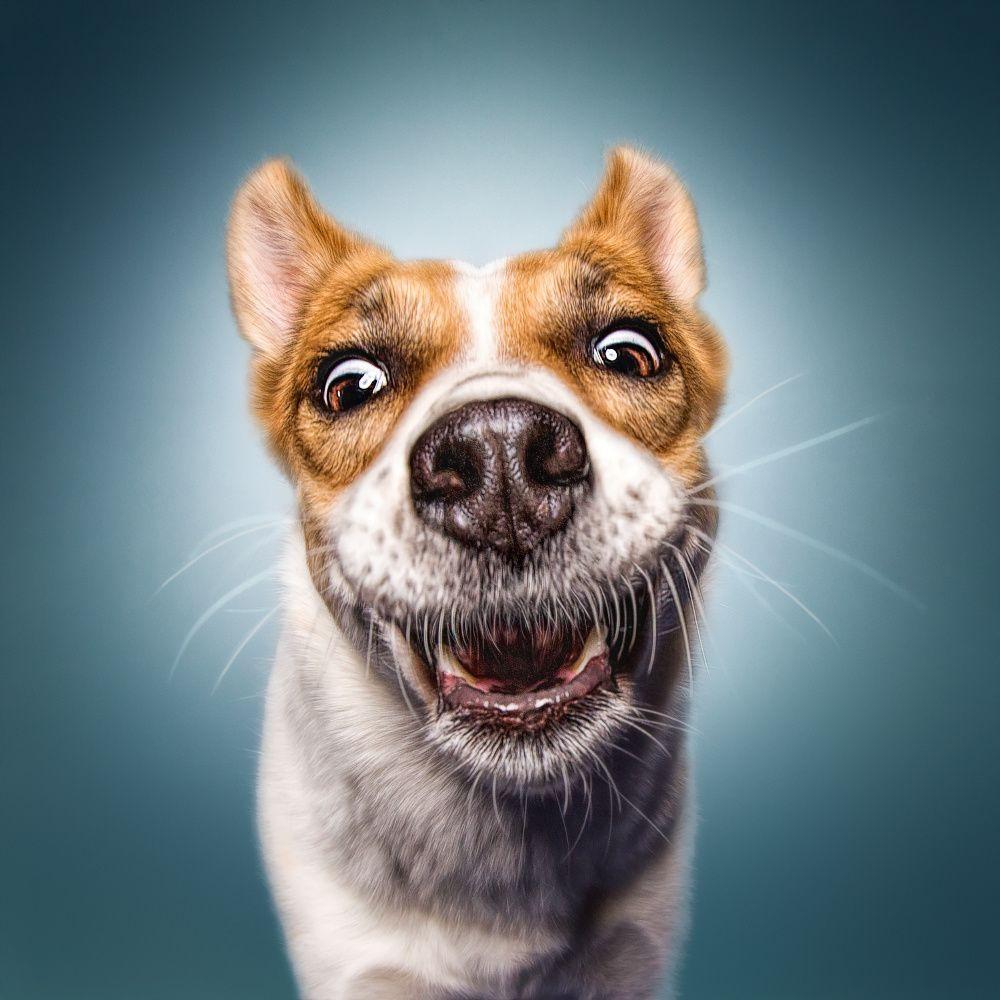 Картинки, открытка с собачкой с зубами человека