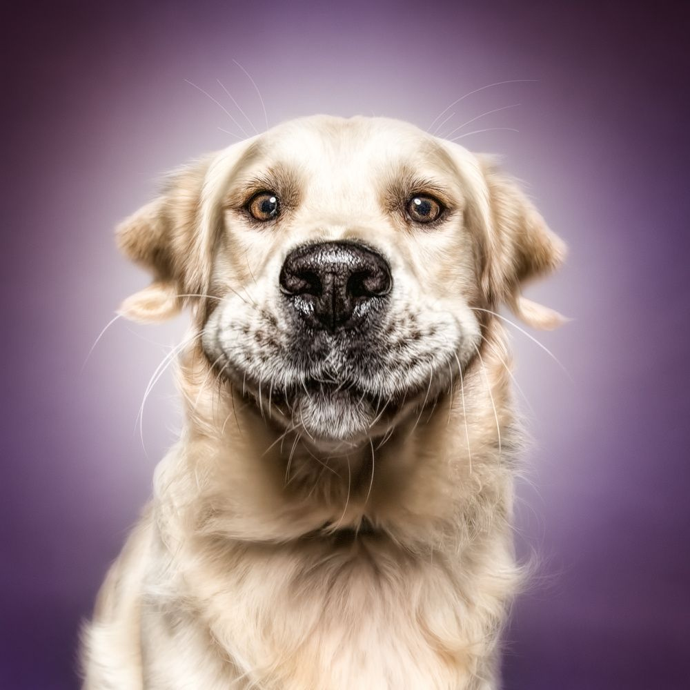 funny dog faces - 736×736
