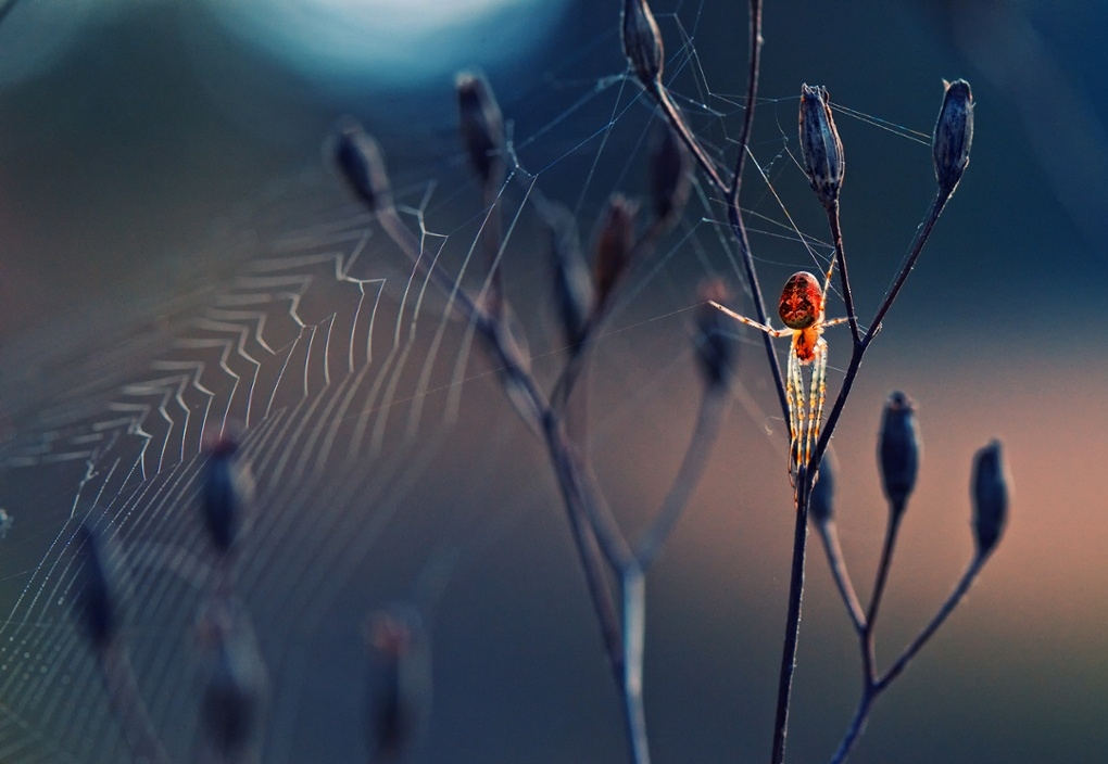 победители society of biology photography award 2014