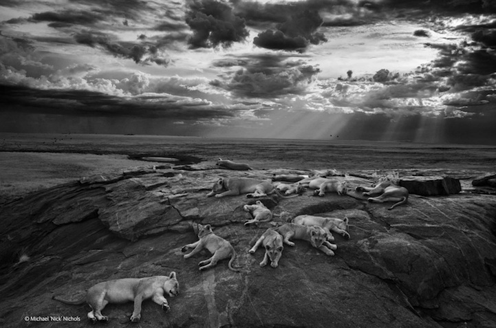 победители wildlife photographer of the year 2014