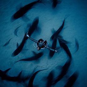 Победители конкурса Underwater Photographer of the Year 2018 | Фотограф Команда foto.by | foto.by фото.бай