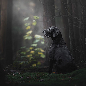 Победители конкурса Dog Photographer of the Year 2018 | Фотограф Команда foto.by | foto.by фото.бай