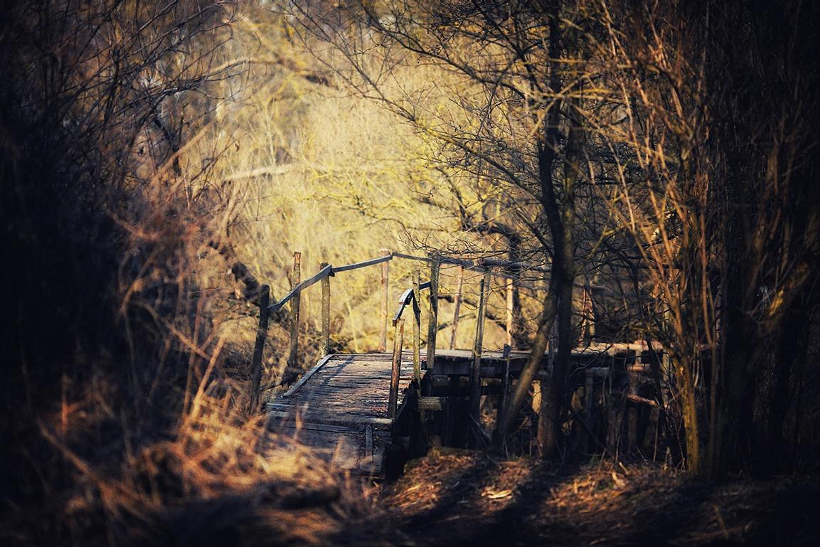 Картинки заброшки в лесу
