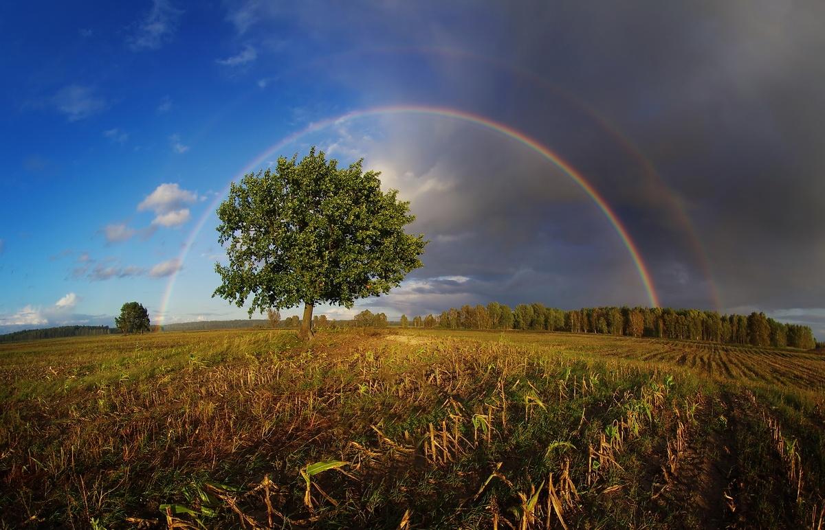 картинки о белорусской природе чем особенность почему