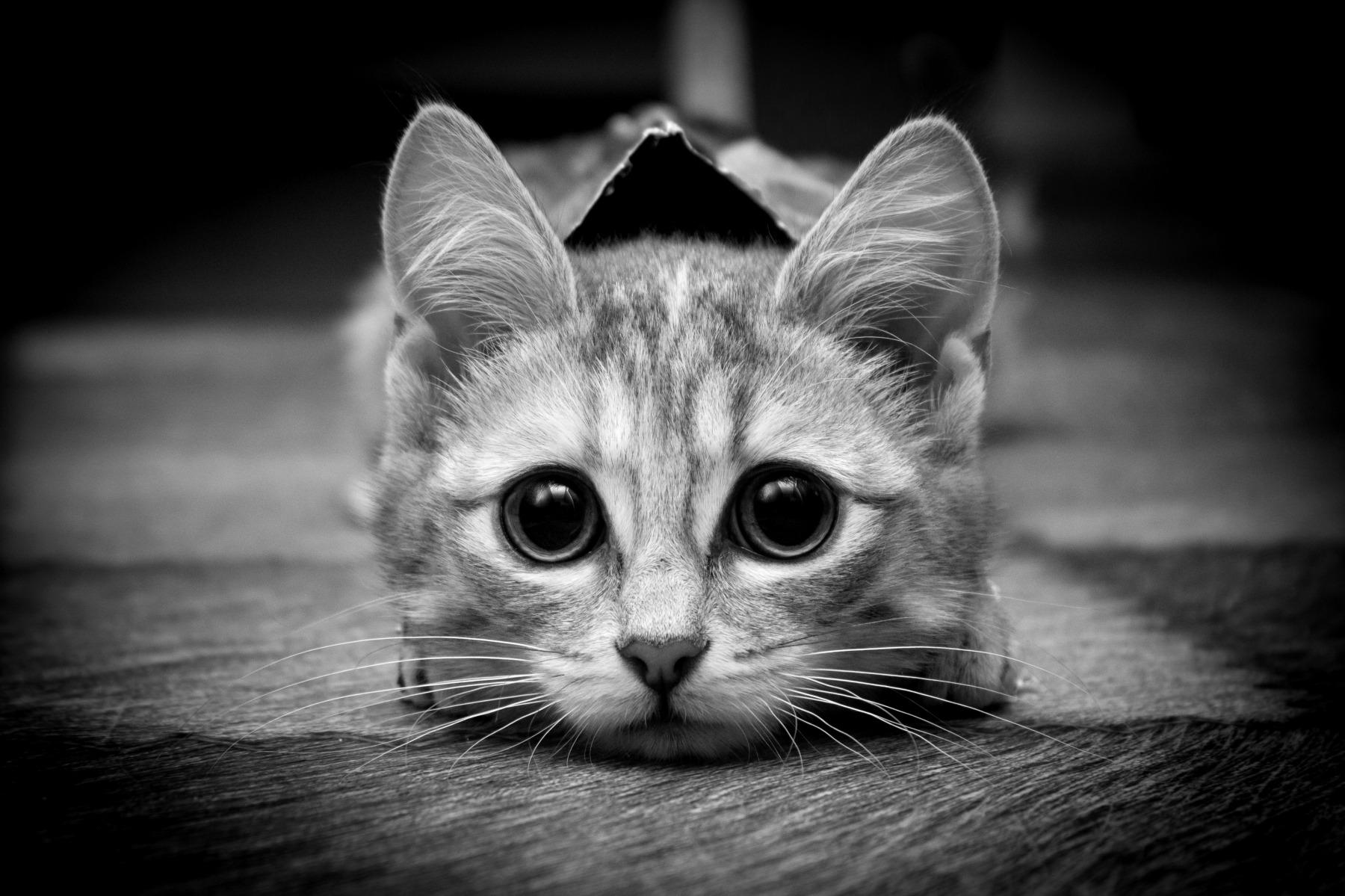 Крутые картинки на аву кошки, совы