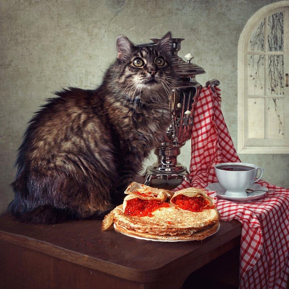 Мужчине сорокалетием, картинки коту масленица
