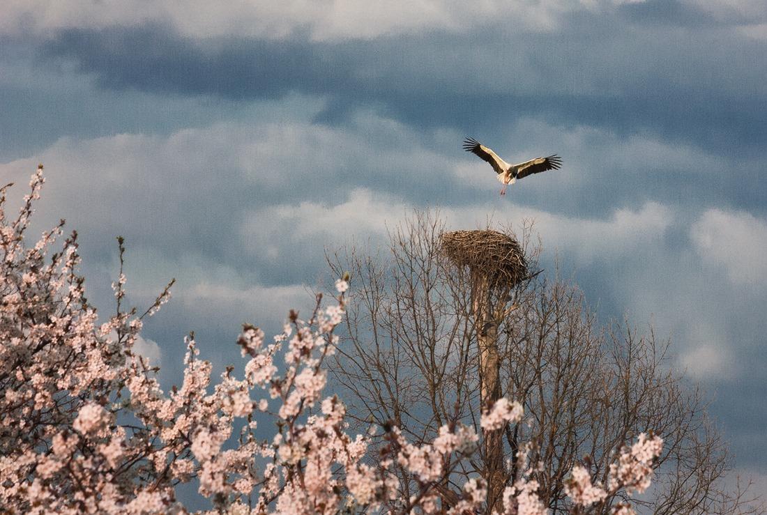 фото белорусская природа весной горбачев закрыл советский
