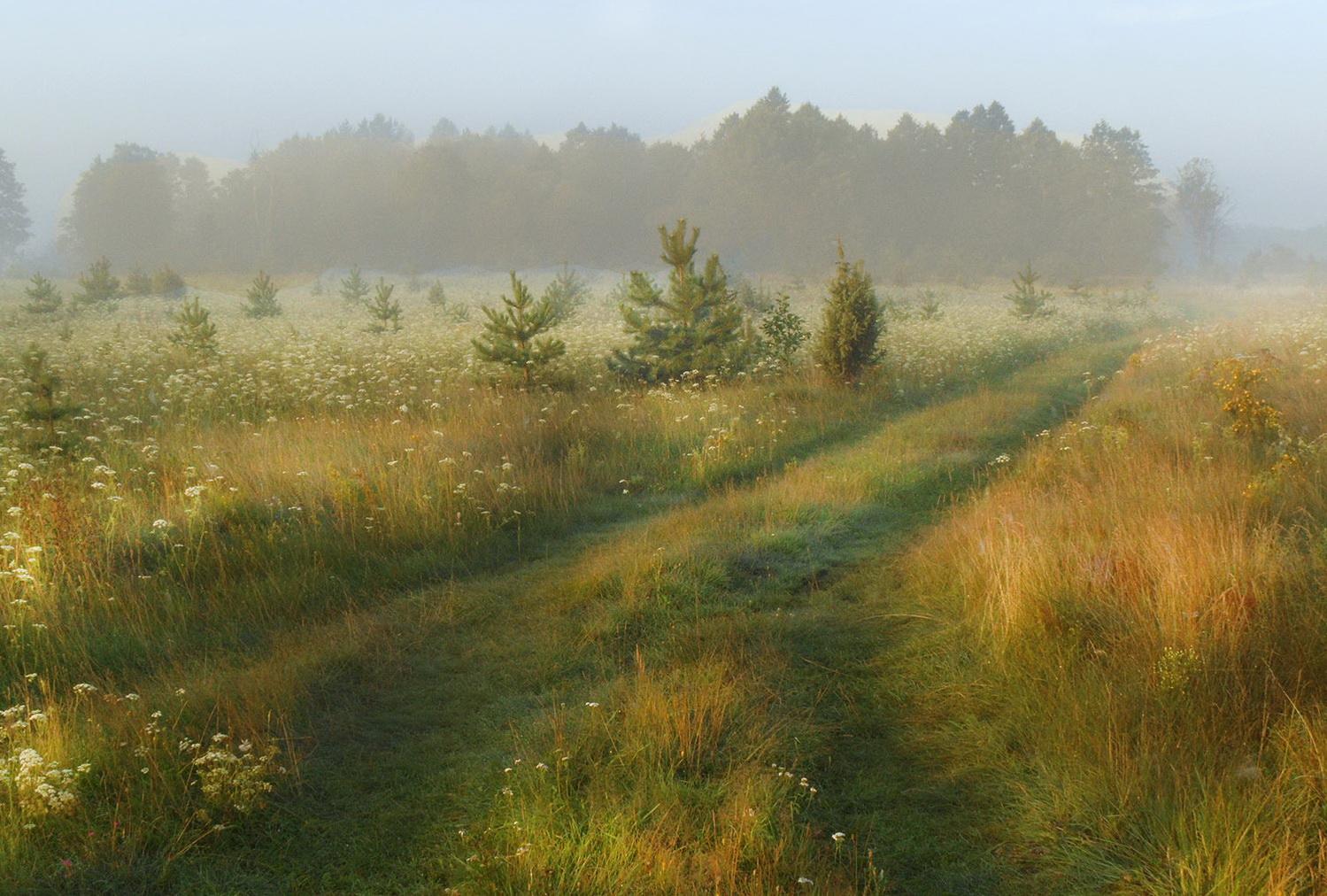 картинка августовский пейзаж современный вид