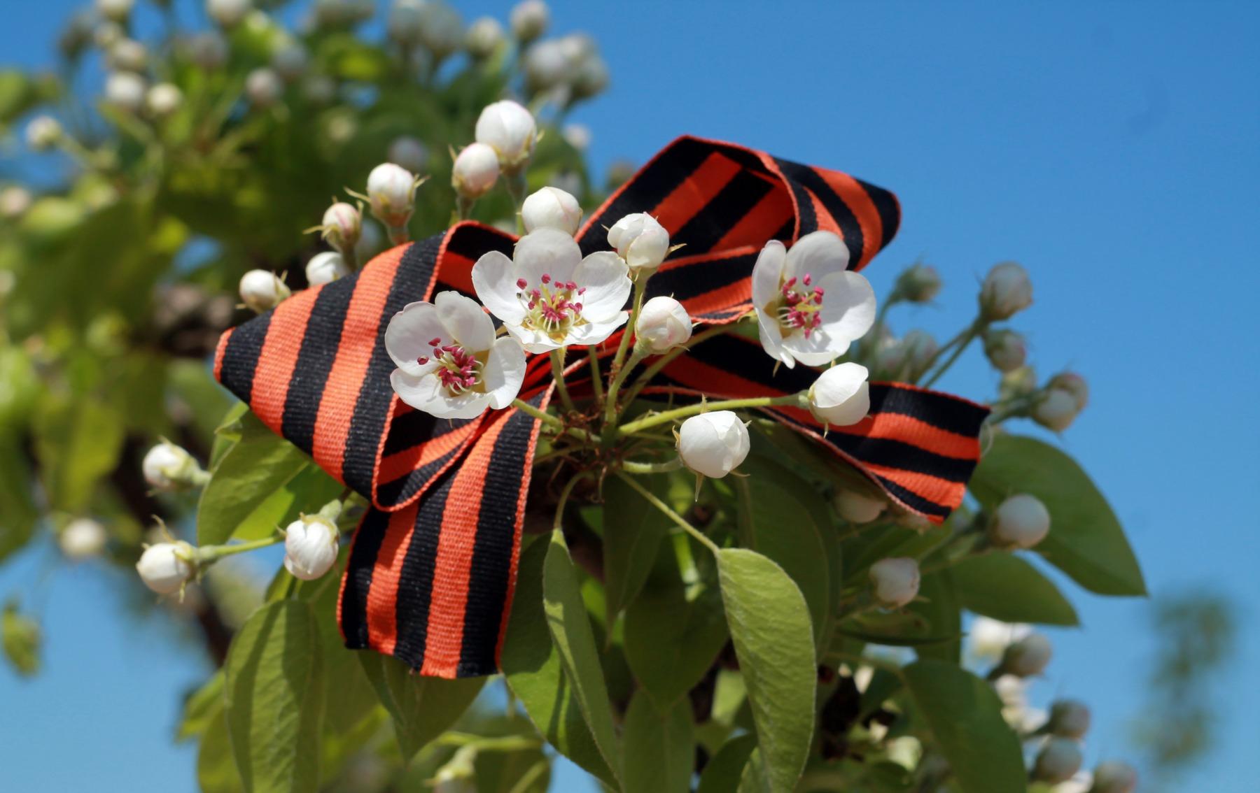 Картинки цветы 9 мая, железа