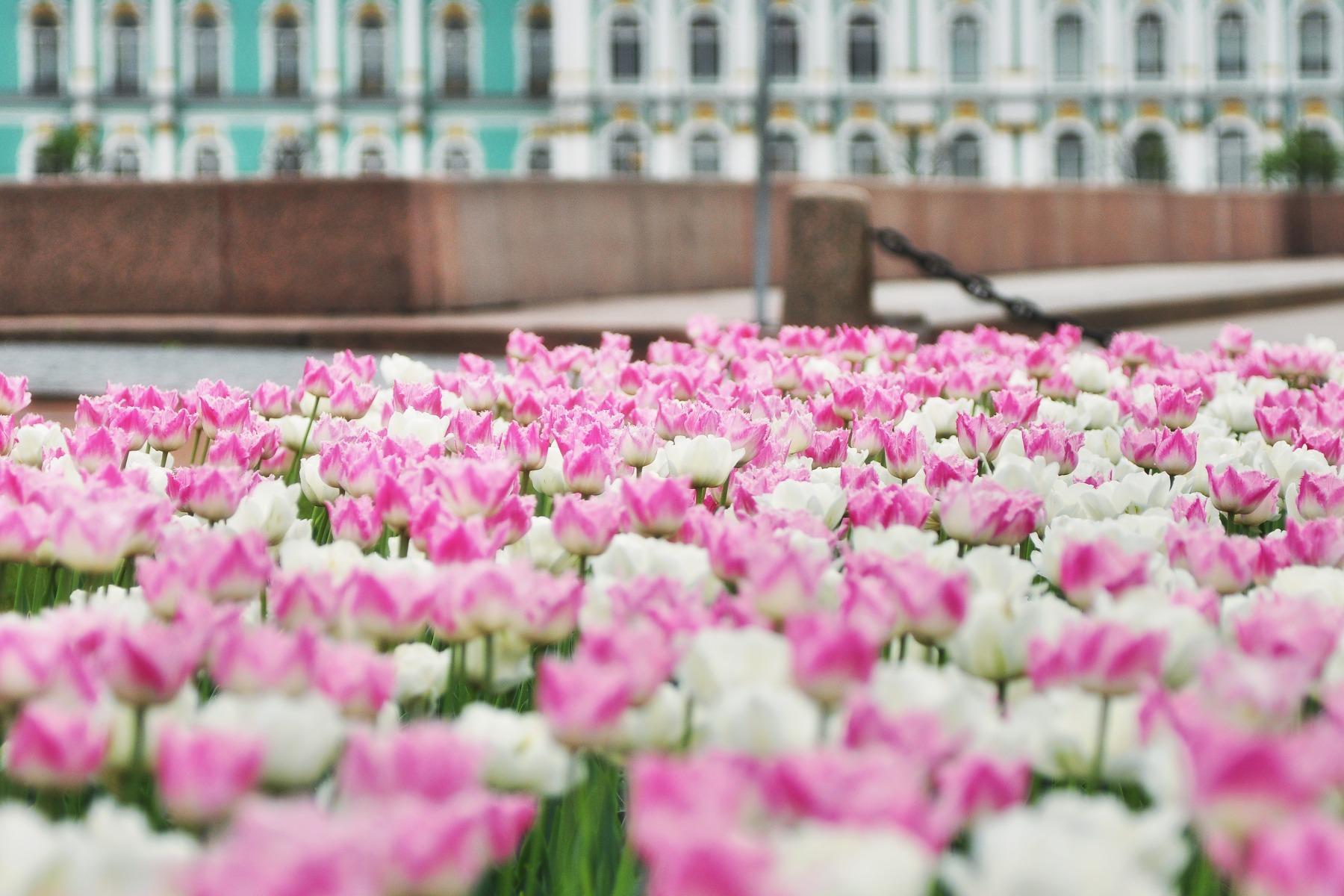 каких фотообои для рабочего стола весна спб можно расположить