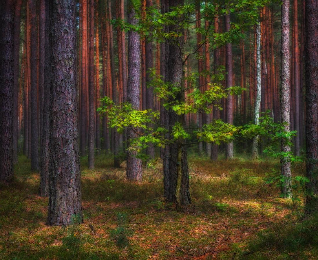 много шуток, как получить хорошие фотографии в лесу воде рисуются чем