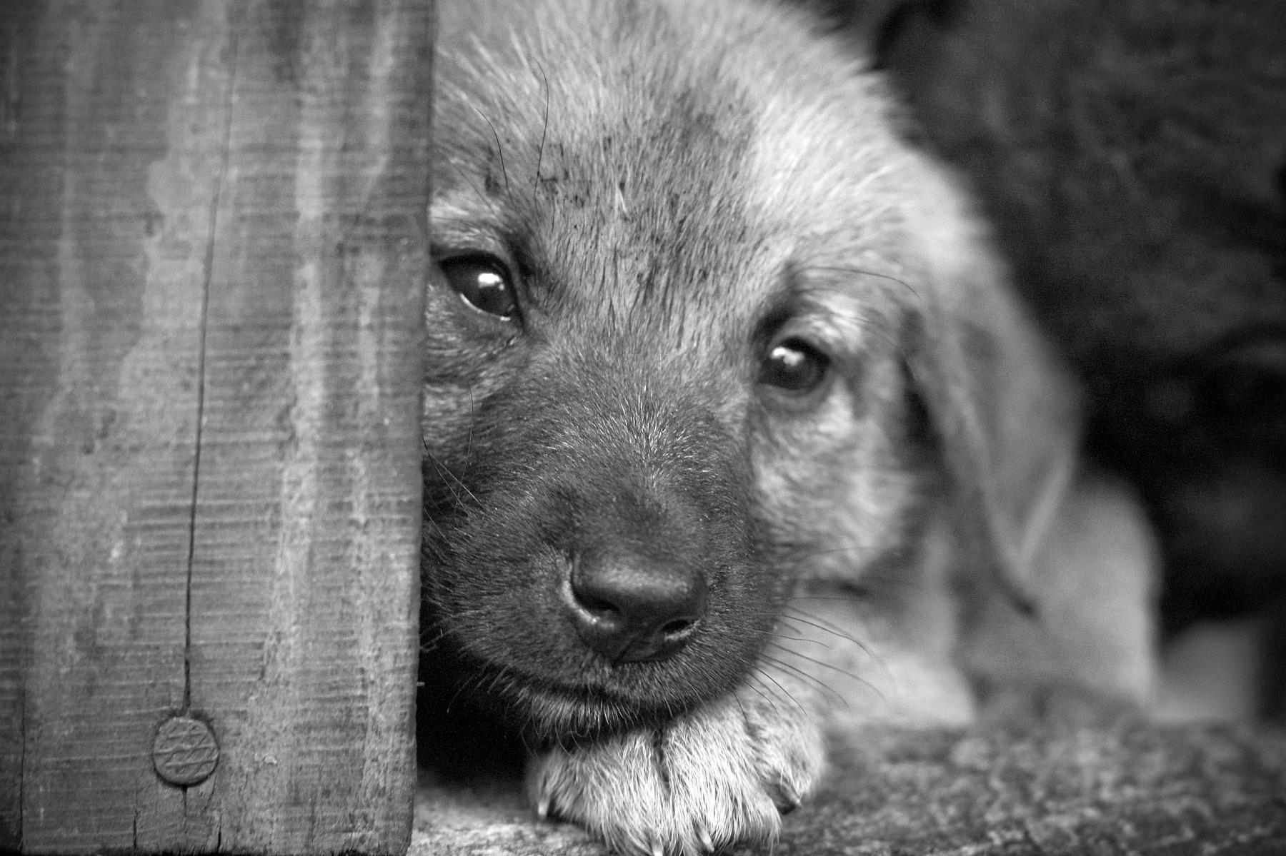 пустышка картинка с грустными глазами зверек скучающий этот момент узкие