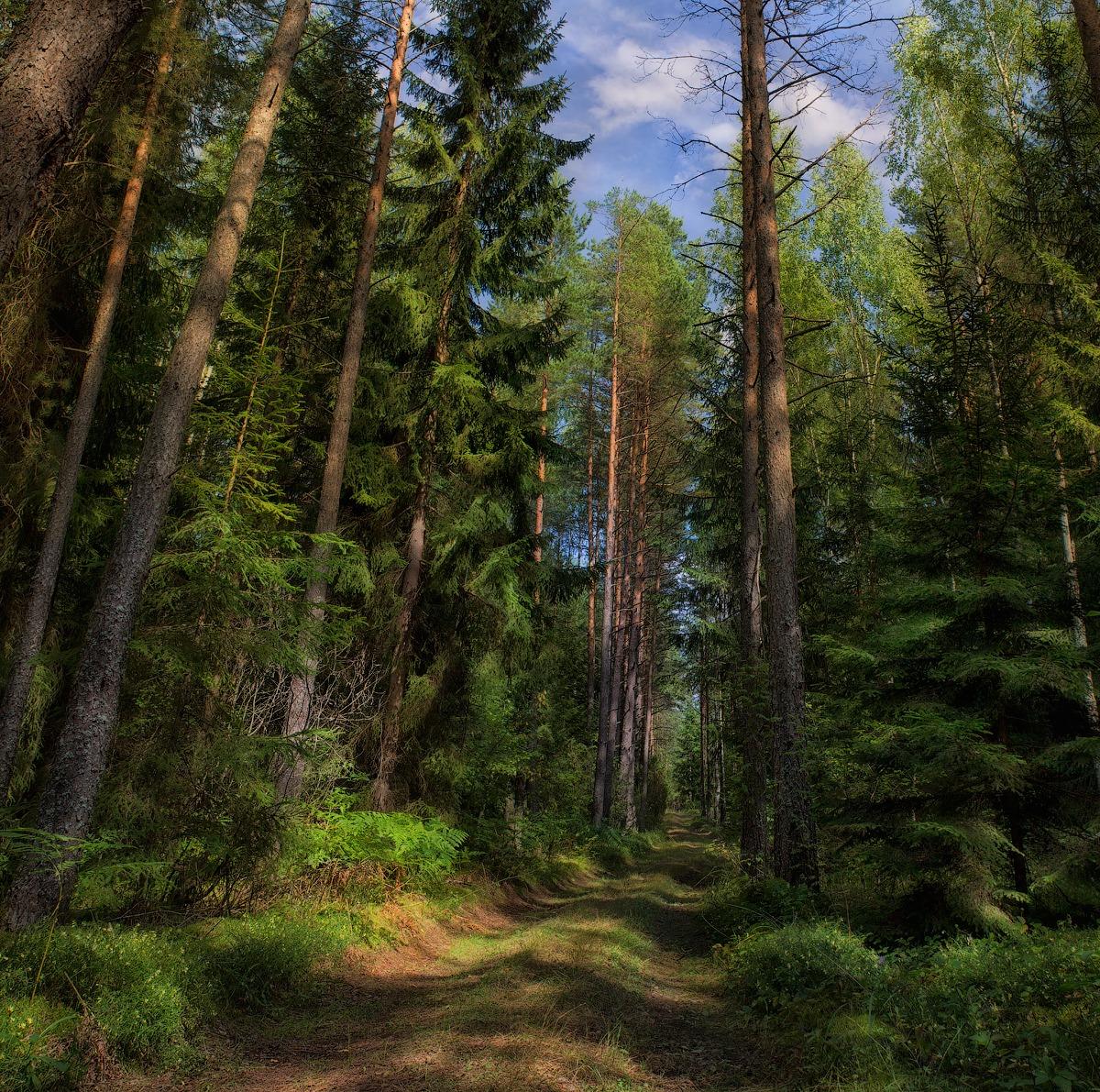 качественные фотографии российского леса занавеска-батик или