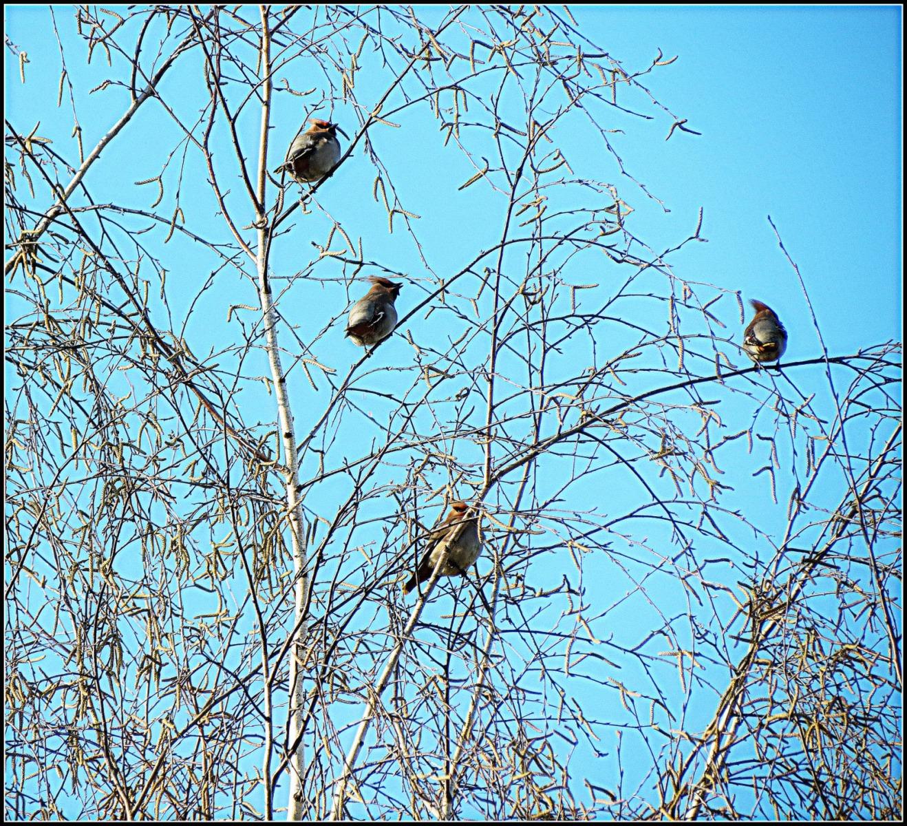 Весна прилетели птицы картинки
