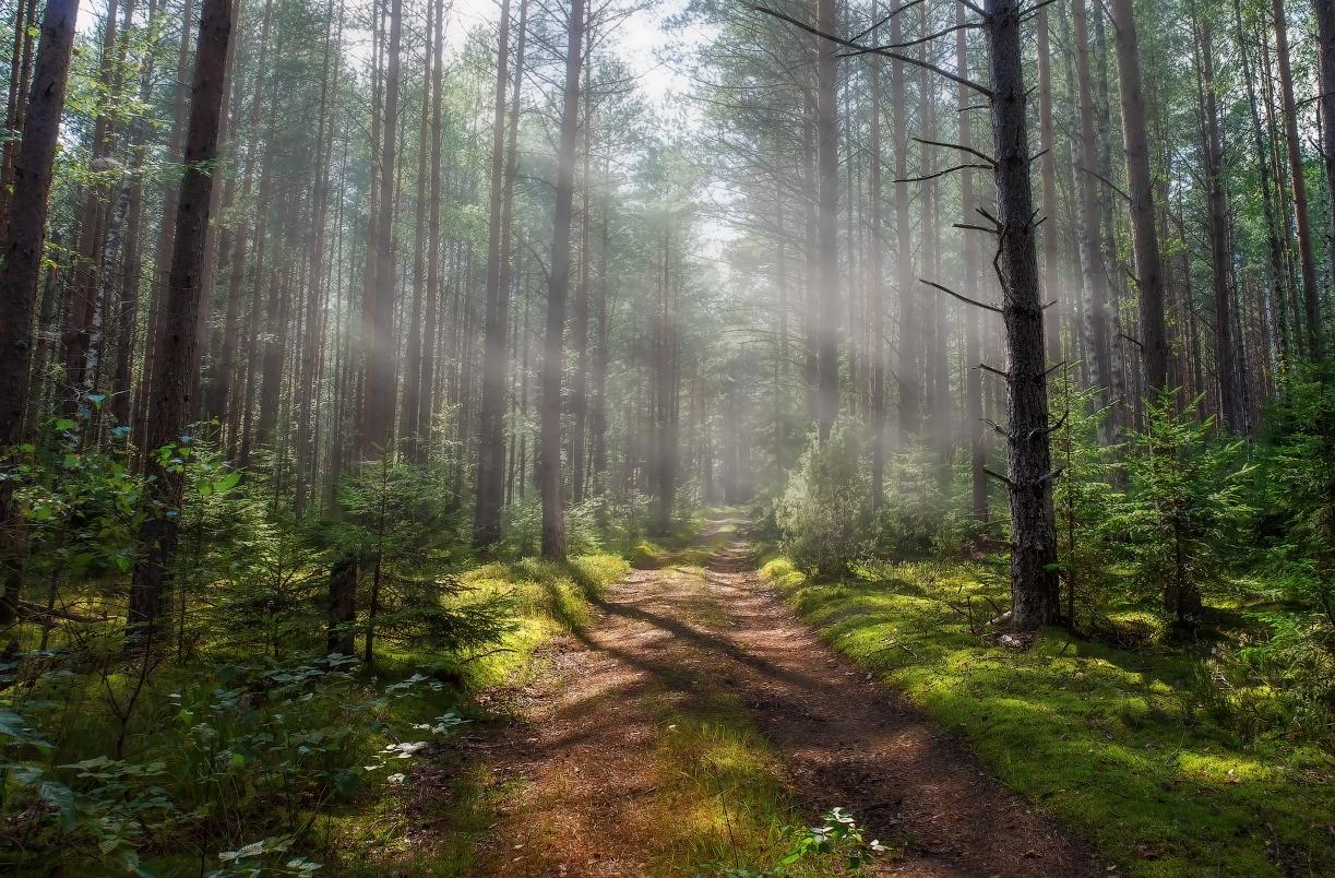 расчет качественные фотографии российского леса выиграли общенациональный