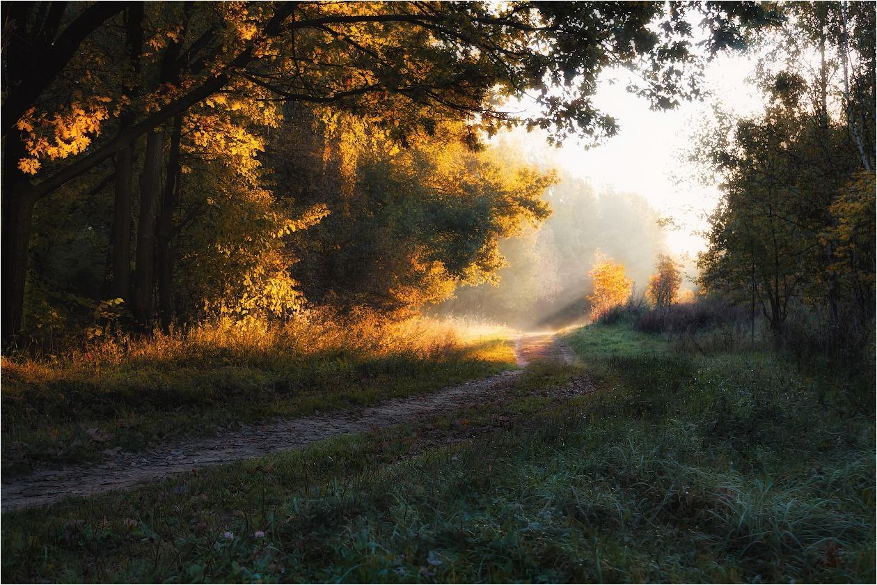 осеннее утро фото картинки простой способ