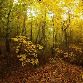 Autumn forest fire | Фотограф Сергей Шляга | foto.by фото.бай