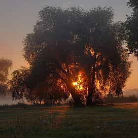 Morning light | Фотограф Сергей Шляга | foto.by фото.бай